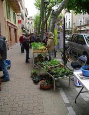 Troc jardinier de graines, fleurs, plants... du club jardin de la MJC