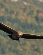 Découverte de la faune aveyronnaise (séjour nature LPO)