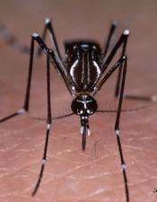 Visio apprendre à se protéger du moustique tigre - CPIE