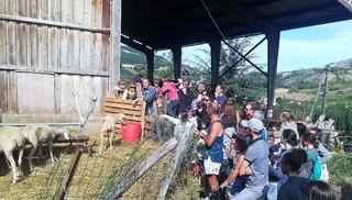 Ferme de Pinet, visite d'un élevage de brebis en agroécologie - La Cresse