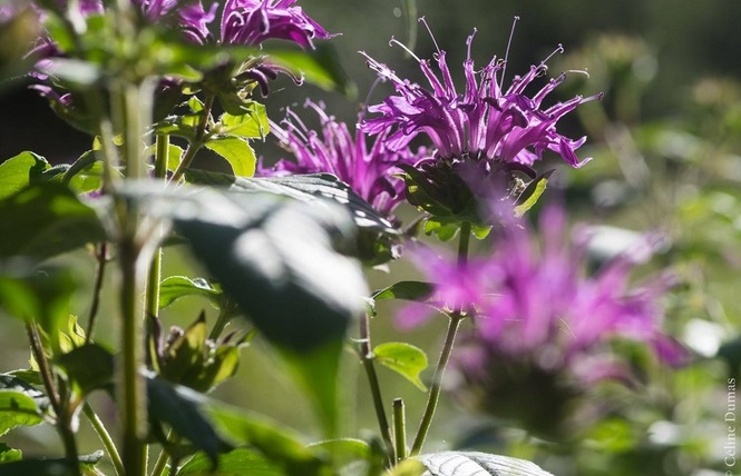 Dumas Sylvie - Plantes aromatiques 5 - Le Rozier