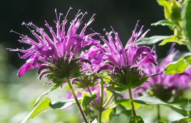 Dumas Sylvie - Plantes aromatiques 3 - Le Rozier
