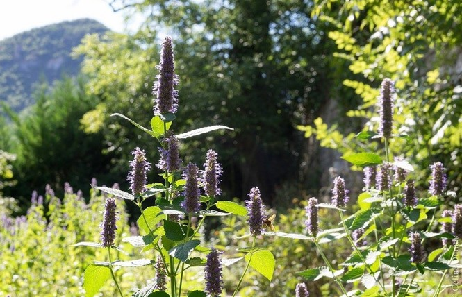 Dumas Sylvie - Plantes aromatiques 4 - Le Rozier