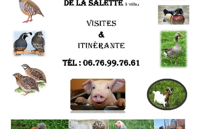 Mini-ferme découverte de la Salette 1 - Millau