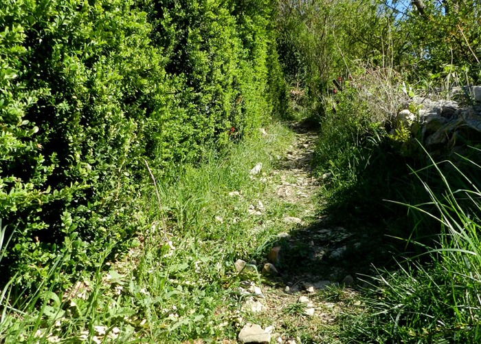 sentier cerise 2.jpg