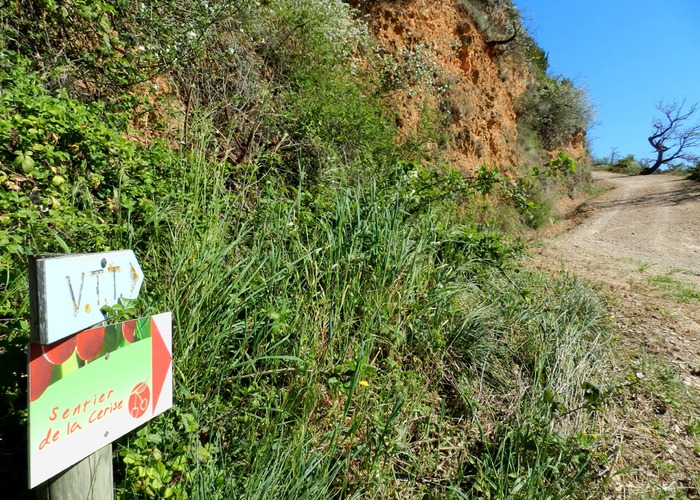sentier cerise 3.jpg